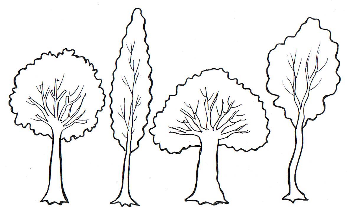 Dibujos de rboles para descargar imprimir y colorear  Colorear