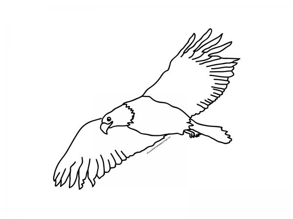aguila (1)