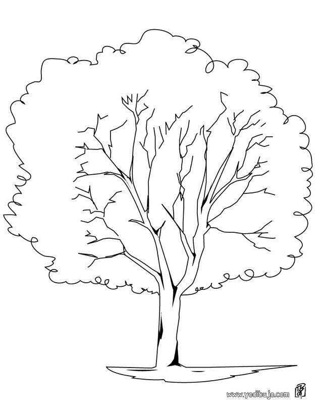dibujo-colorear-platano-arbol_8jn