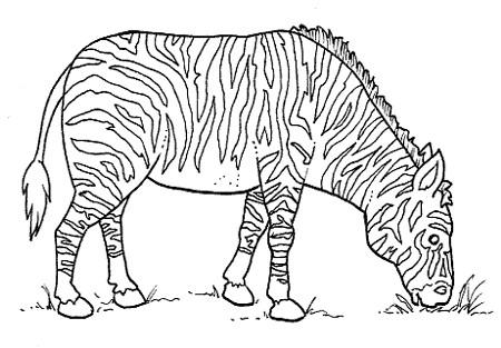 animales salvajes 5