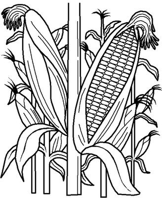 legumes (3)