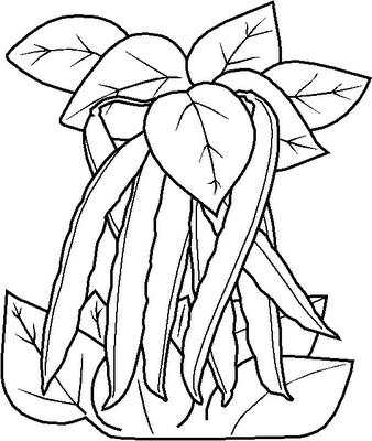legumes (5)