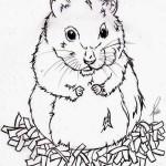Dibujos para colorear de hámsters
