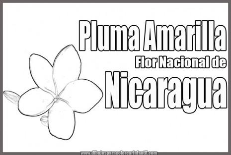 florpluma amarilla flor nacional de nicaragua para colorear
