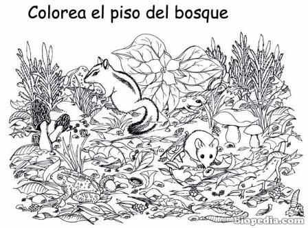 Dibujos del Da Mundial de la Biodiversidad para colorear
