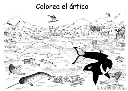Worksheet. Dibujos del Da Mundial de la Biodiversidad para colorear