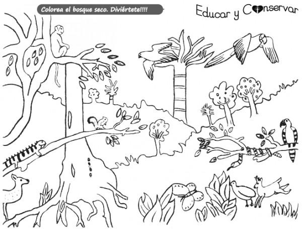 Dibujos De Naturaleza Para Colorear E Imprimir: Dibujos De La Naturaleza Para Colorear. Dibujos Para