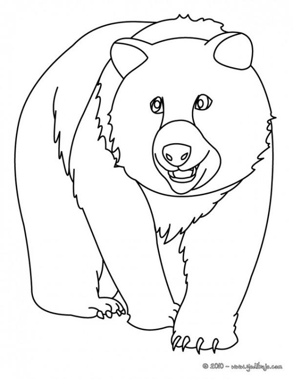 Dibujos de osos salvajes para pintar | Colorear imágenes