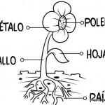 Partes de las plantas para pintar