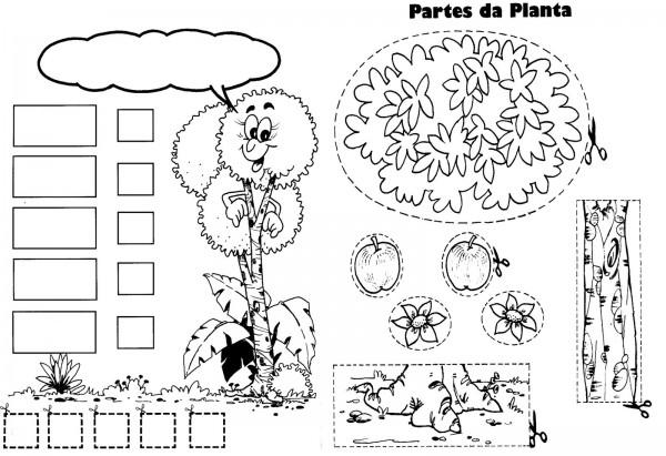 Partes de las plantas para pintar | Colorear imágenes