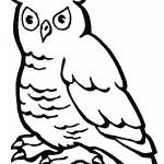 Imágenes para pintar de aves