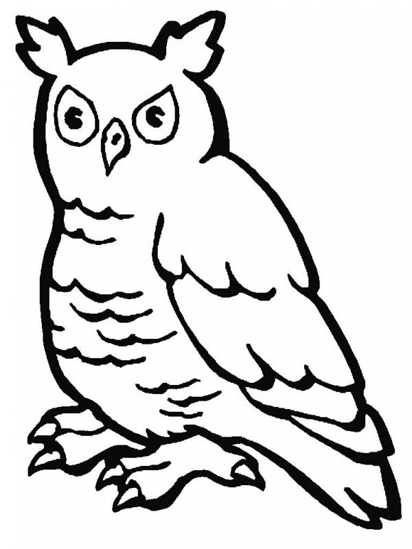 Imágenes para pintar de aves  Colorear imágenes