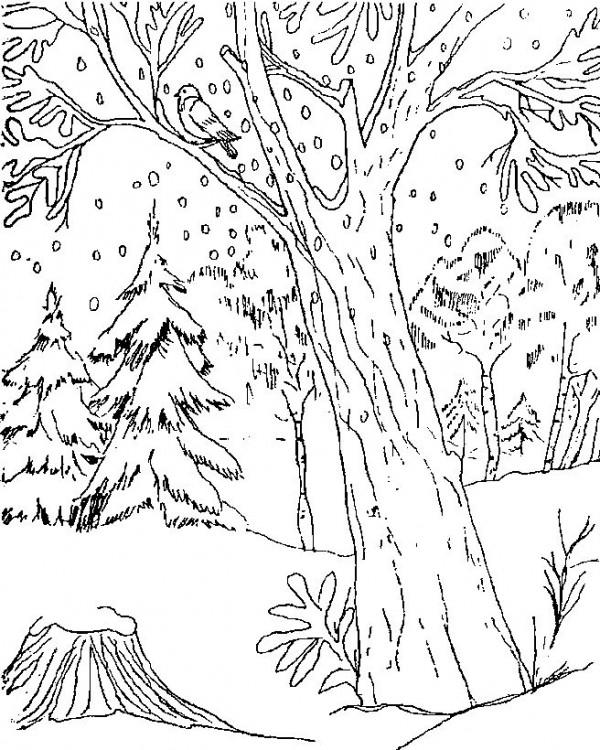Imgenes y Dibujos para Colorear  Part 53