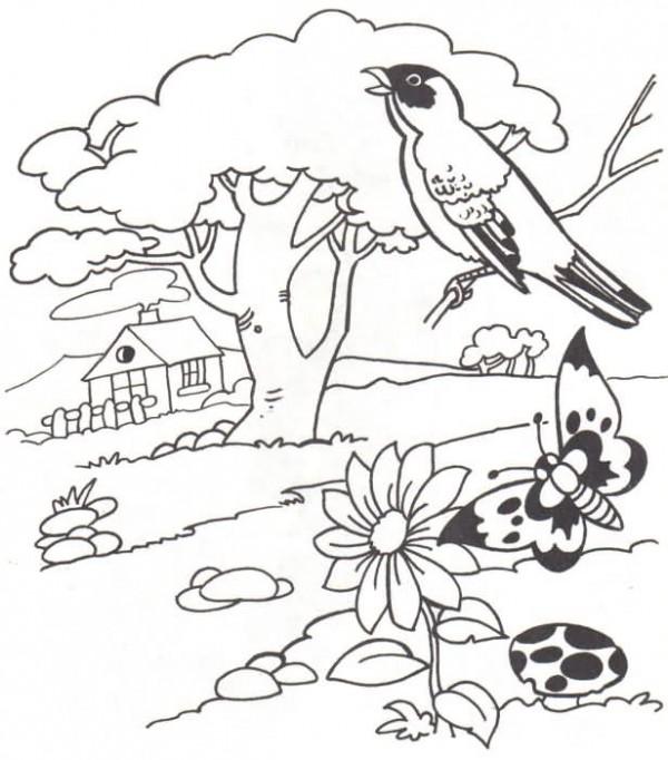 paisajes con aves1