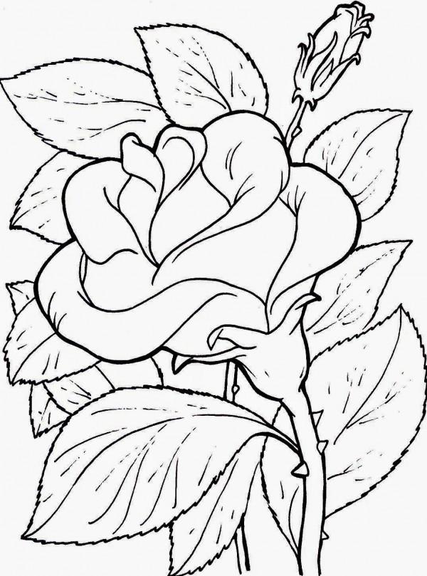Flores para Colorear 27