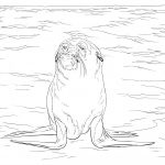 Fotos de lobos marinos para pintar