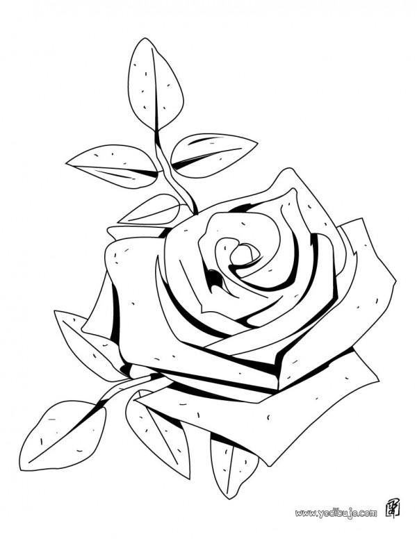 dibujo-colorear-flor-rosa-source_89c