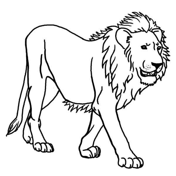 leon salvaje para pintar
