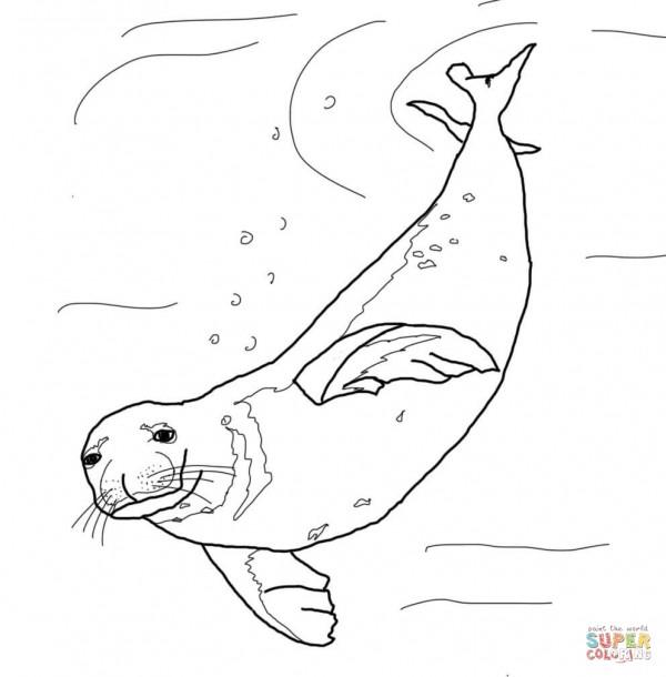 Fotos de lobos marinos para pintar  Colorear imgenes