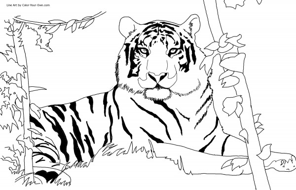Fotos de tigre para pintar Colorear