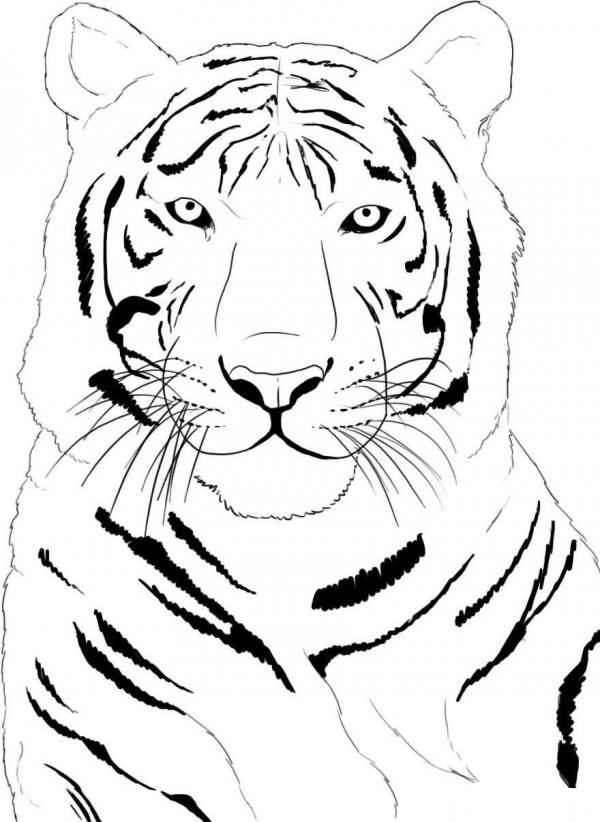 Fotos De Tigre Para Pintar Colorear Im 225 Genes