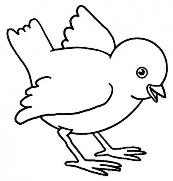 Imágenes de pollos para colorear   Colorear imágenes