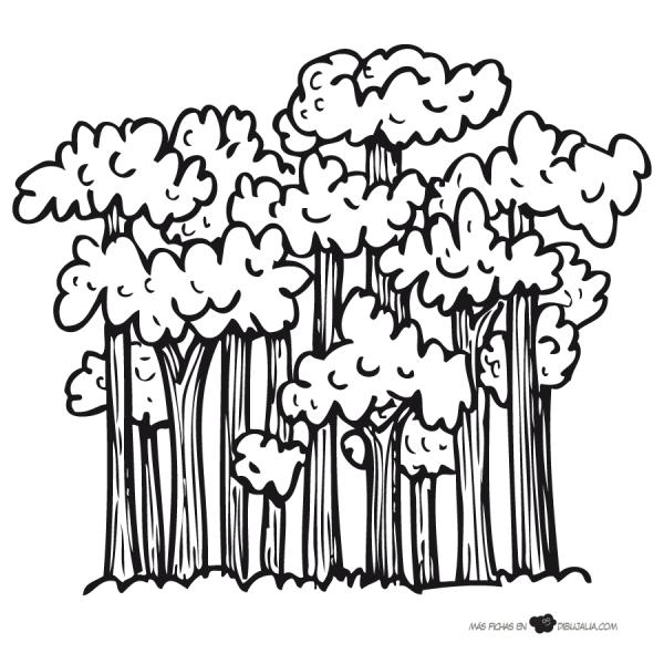 Paisajes de bosques para pintar  Colorear imgenes