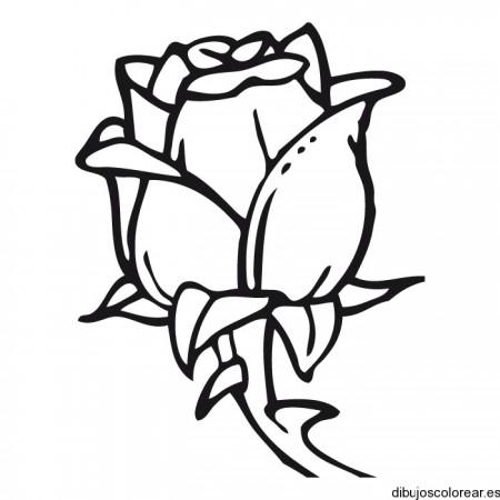 Dibujos de flores hermosas para descargar imprimir y pintar esta