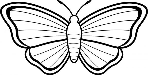 dibujos-para-colorear-de-mariposas