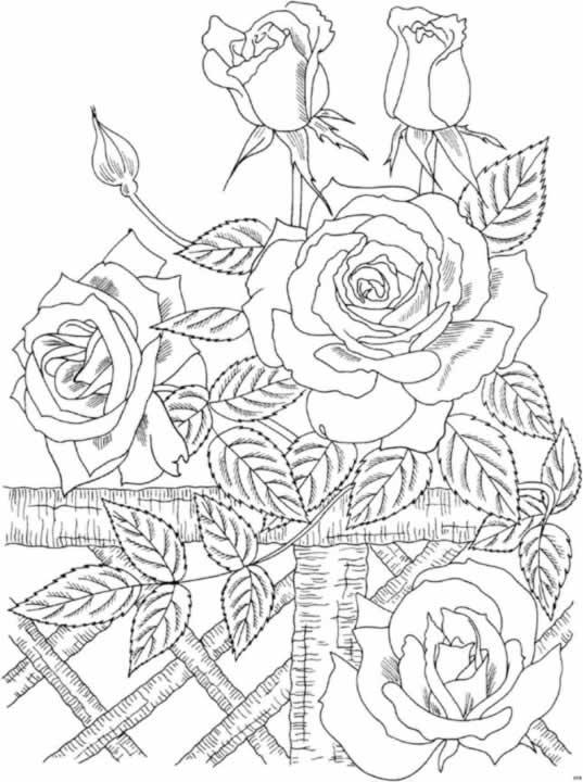 Flores Para Colorear F 225 Ciles Dificiles Y Hermosas