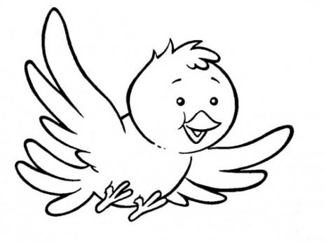 Aves (61)