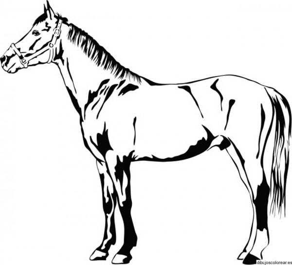 caballos hermosos para pintar y divertirse