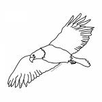 pintemos las aves