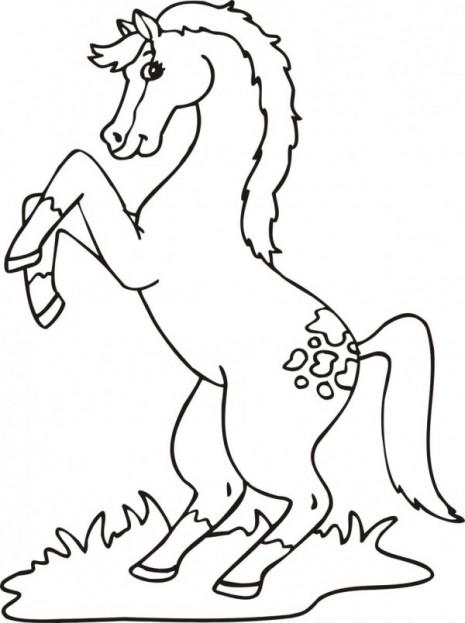 caballo-salvaje