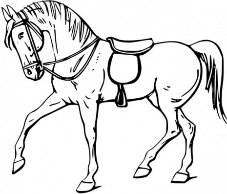 caballos8