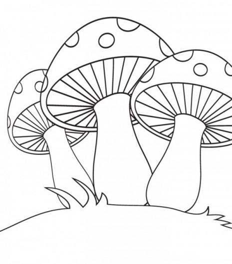 colorear-hongos