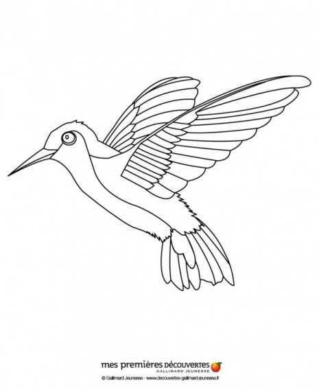 le-colibri-source-anz98