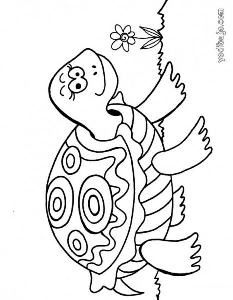 tortuga-source_m2k (1)