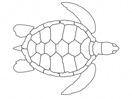 tortugas6