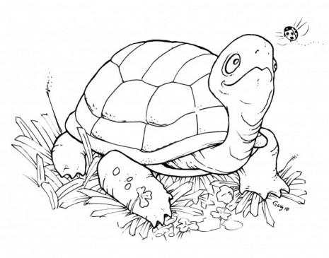 tortugas8