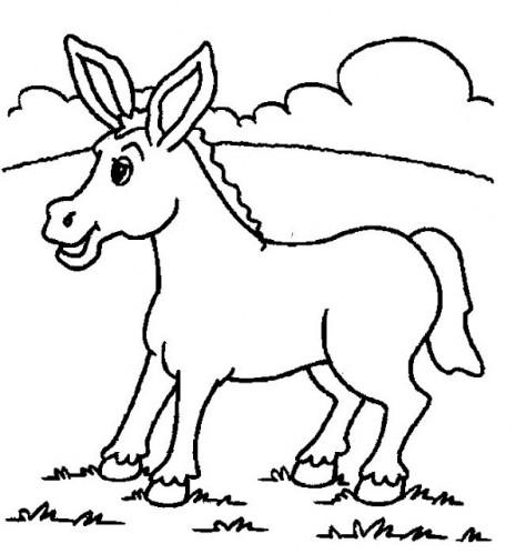 burro_6