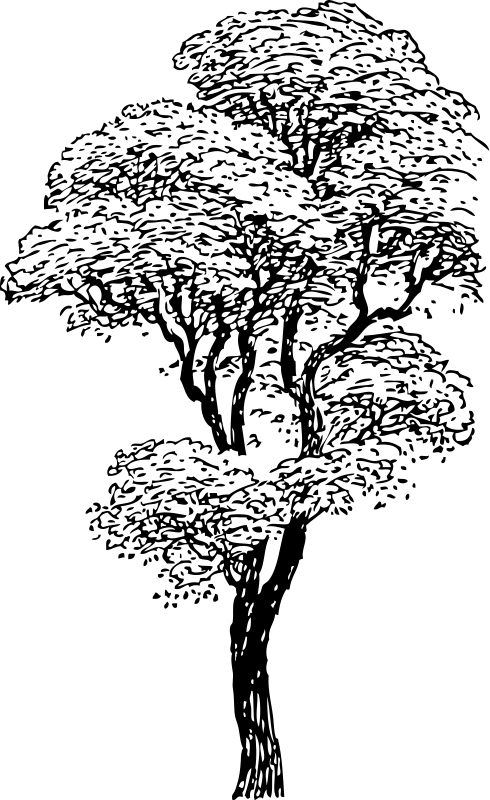 arbol-para-colorear-2
