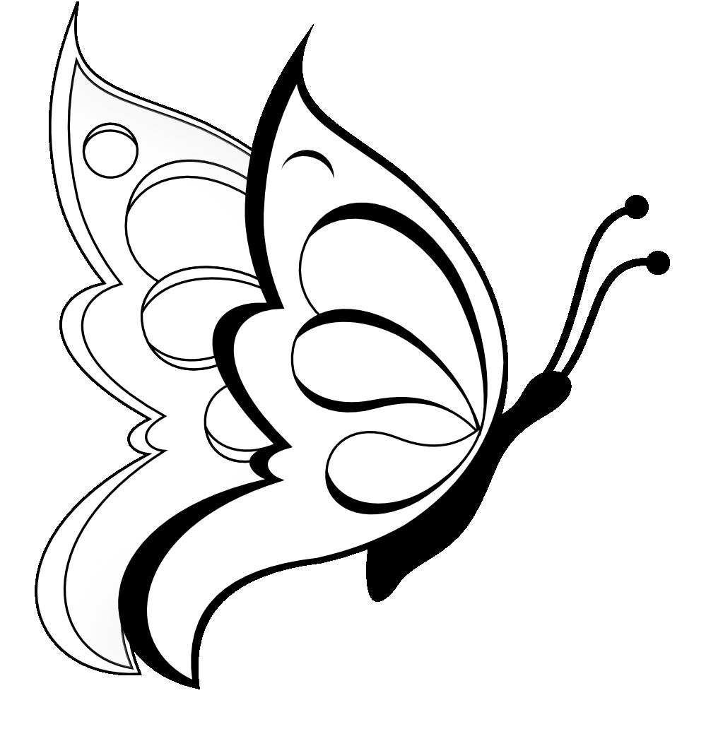 butterfly_mariposa_borboleta