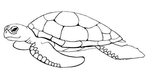 colorear-tortugas