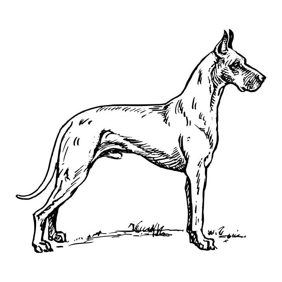 m-dibujos-razas-perros.html-3