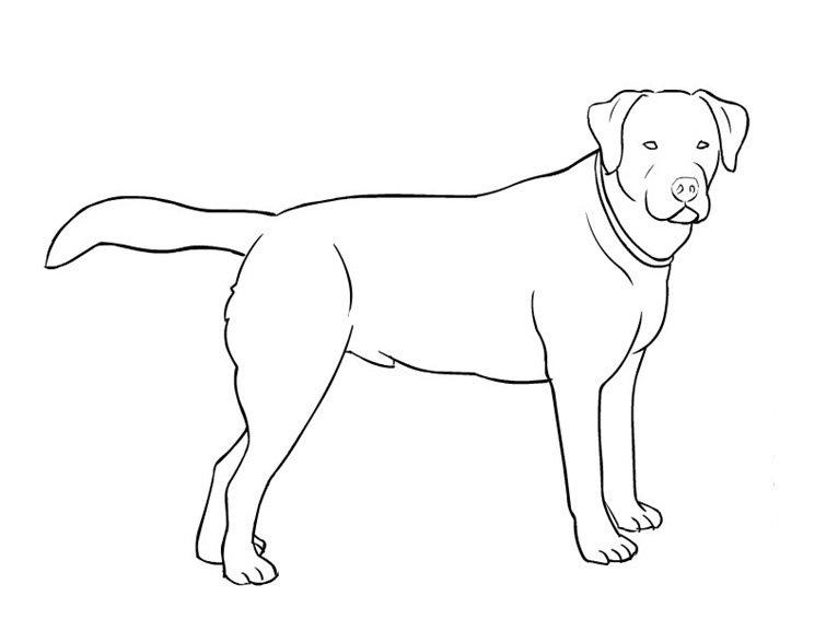 m-dibujos-razas-perros.html-8