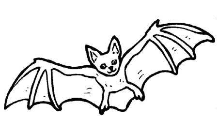 titereDibujo-de-murciélago-para-colorear-en-Halloween