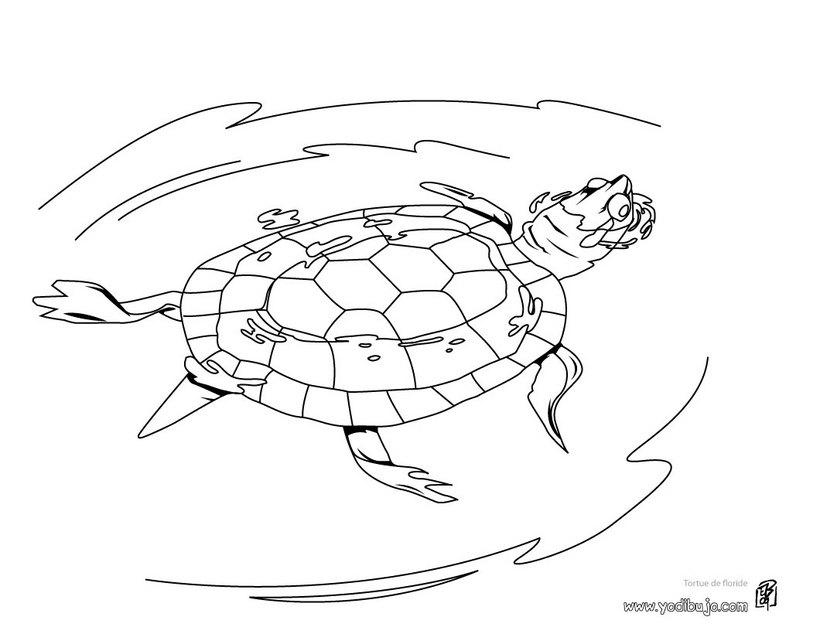 tortuga-dibujo-pintar_cye