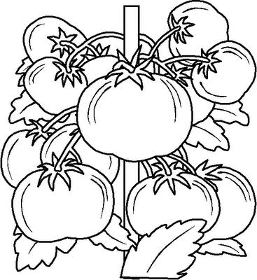 legumes (7)