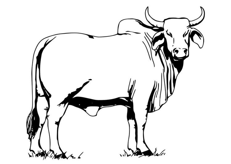 Dibujos de toros para pintar colorear im genes - Dessin de toro ...